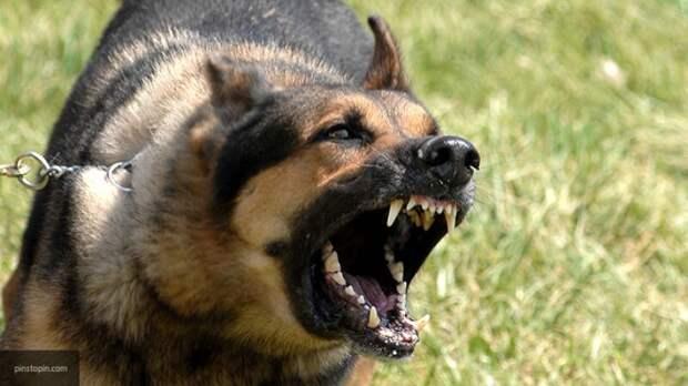 Кинолог Тарасов: за агрессию собак надо уголовно наказывать хозяев