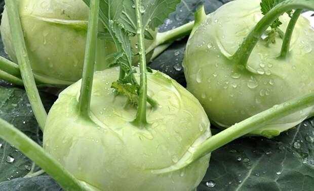 Hürriyet (Турция): этот овощ — словно лекарство… Доступен в любое время года, его полезные свойства не перечесть!