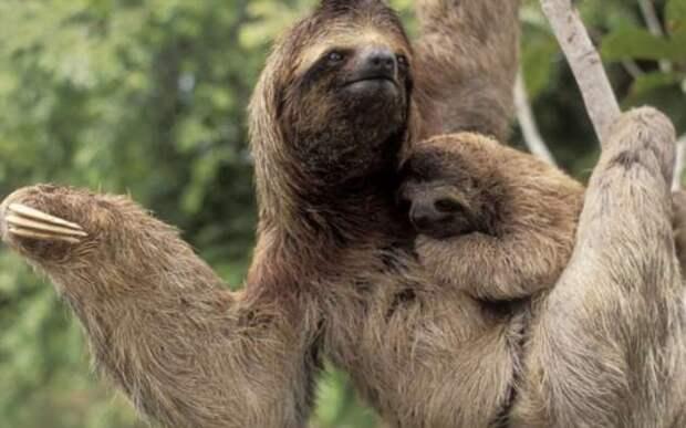 Самые медленные животные в мире, известные современной науке (10 фото)