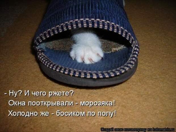 Коллекция забавных фотографий с котейками и прикольными подписями, которые подарят вам улыбку!