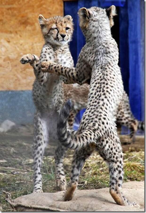 Стоп-кадр из жизни животных