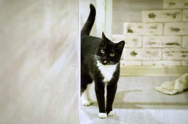 Идеальная кошка ищет Доброе Сердце!!!