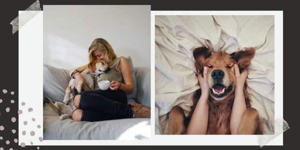 Друг человеческого долголетия: 8 удивительных фактов о влиянии собак на здоровье