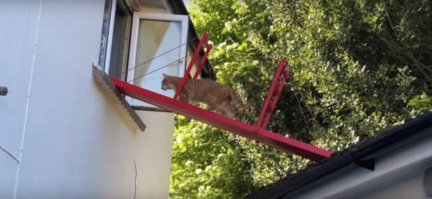 Теперь Реджи спокойно путешествует из комнаты на гараж и обратно по собственному мосту, как порядочный кот в мире, животные, забота, история, кот, люди