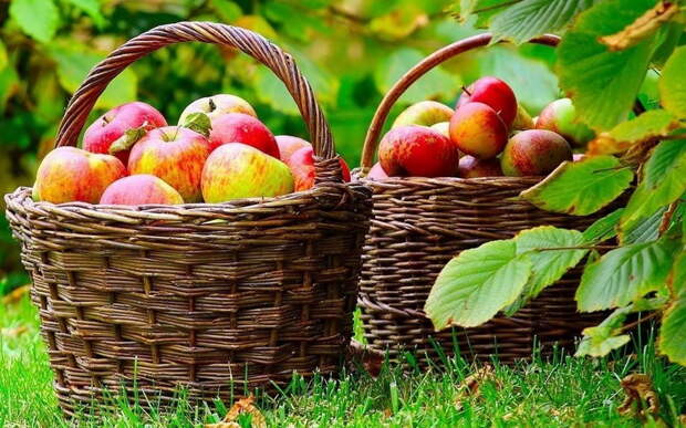 Холодное и дождливое лето. Как победить болезни в саду и огороде