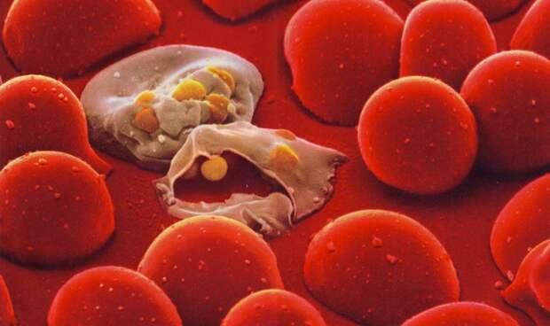 Наша невероятная иммунная система система, иммунитет, микрофотография