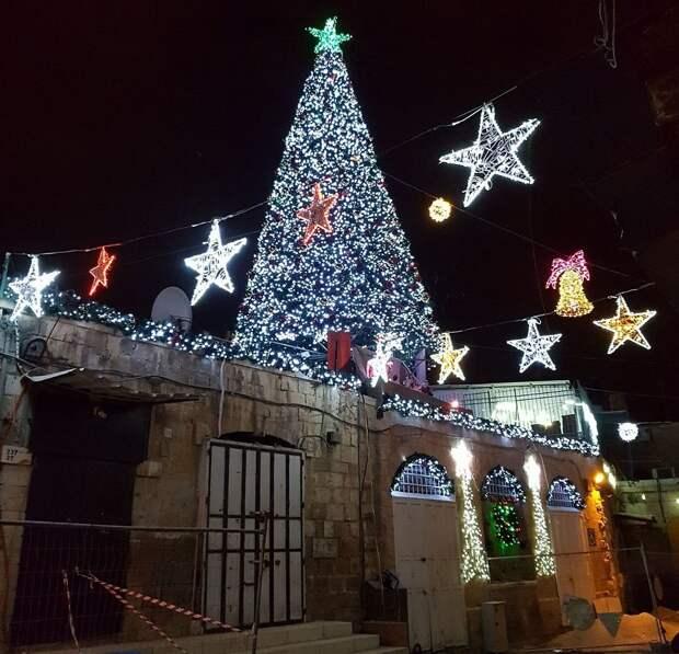 Еще одна елка в Иерусалиме. Фото: Эли Мандельбойм