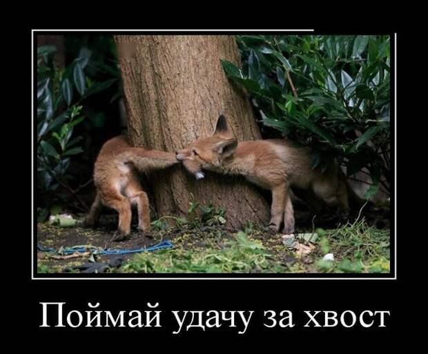Забавные демотиваторы. | Смешные фотографии животных, Смешные ...