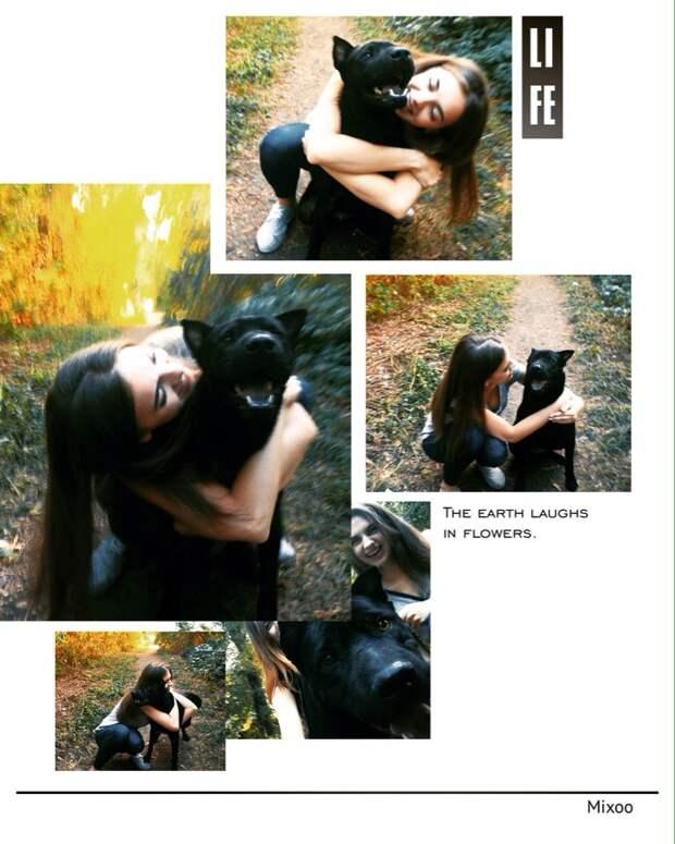 История о том, как я думала завести грызуна, а усыновила собаку