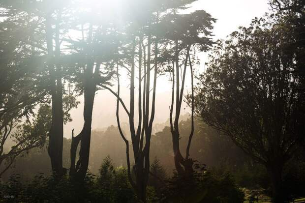 Прогулки по Сан-Франциско
