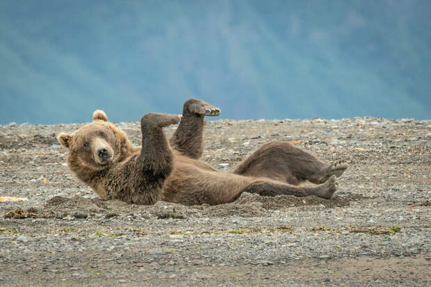 Джанет Майлз / Comedy Wildlife Photo Awards 2020