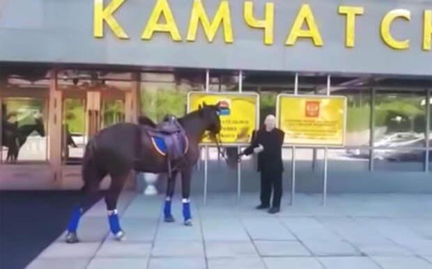 Депутат все же приехал на заседание на коне. И будет оштрафован