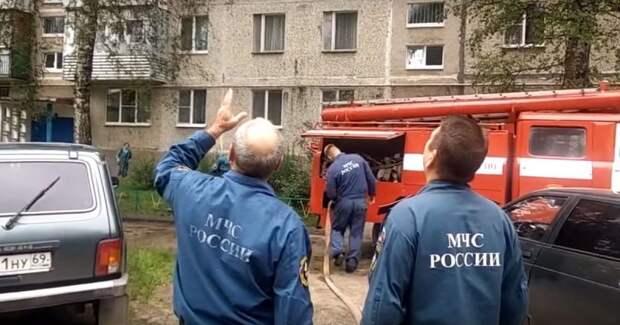 Пожарные пытались сбить с дерева кота с помощью брандспойта видео, кот, кошка, мчс, пожарные, прикол, спасение, юмор