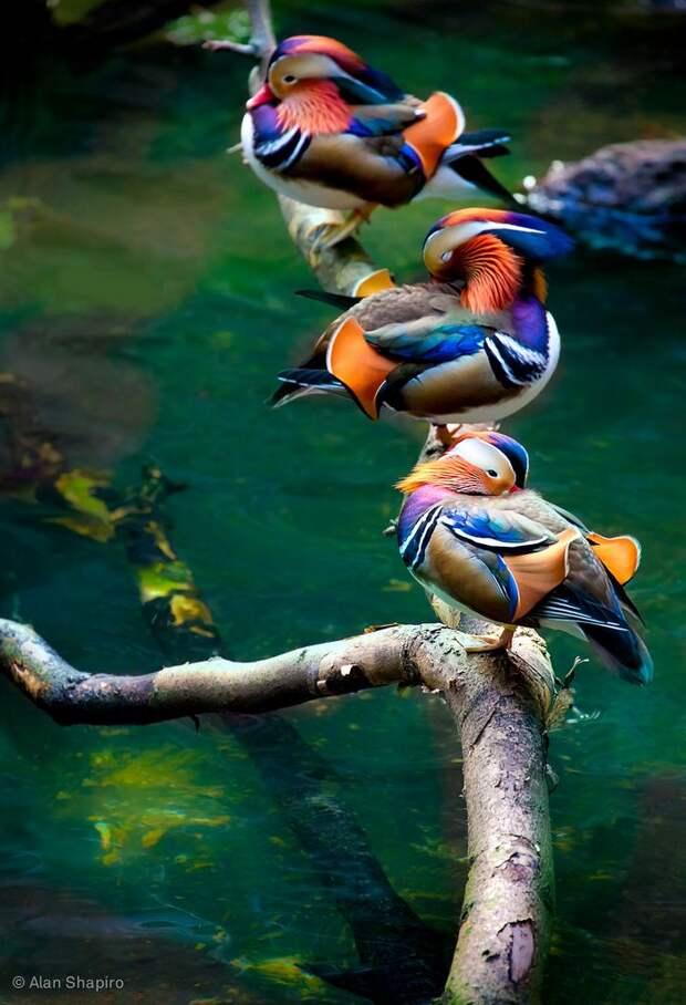 Природная красота в фотографиях