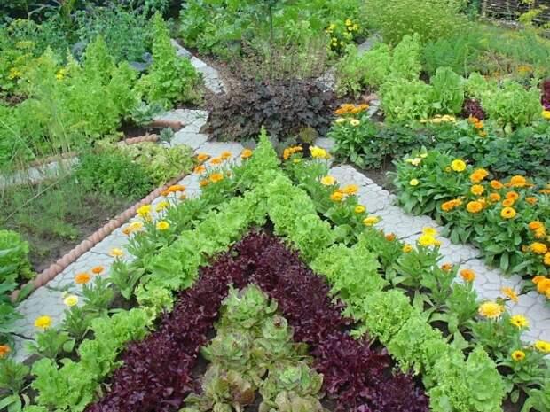 Что такое уплотненные посевы