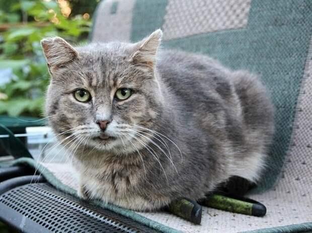 Животное Дно: в псковском райцентре подростки безнаказанно убивают кошек