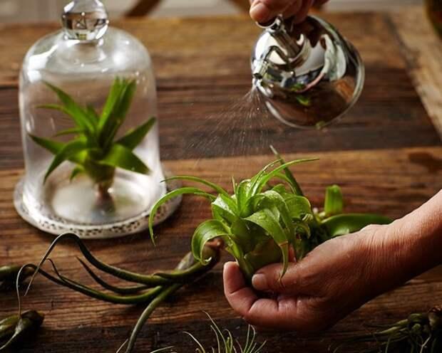 Опрыскивание растений