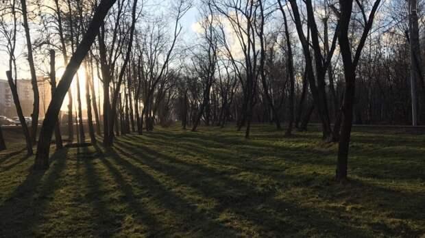 Потепление до 18 градусов ожидается в пятницу в Москве