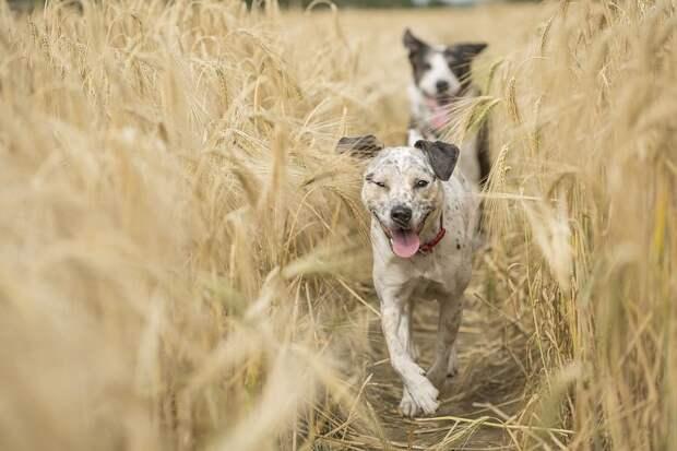 dogs-4688586_960_720.jpg