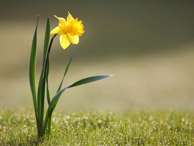 50 растений с желтыми цветами