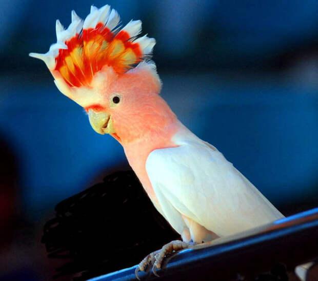 История самого вредного попугая в мире