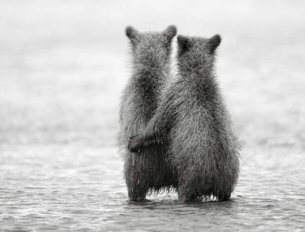 Животные-близнецы - 25 очаровательных фото-14