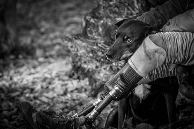 """2 место в категории """"Собаки-помощники"""" - Джон Ферретт, Великобритания Кеннел клаб, животные, конкурс, лондон, портрет, собаки, фото, фотография года"""