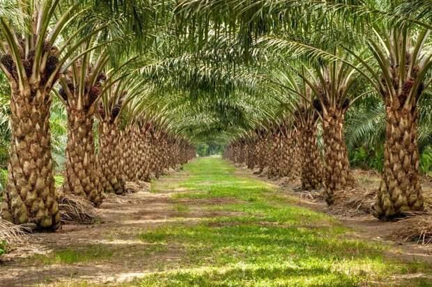 Неожиданный поворот: как в Малайзии макаки из врагов превратились в друзей фермеров