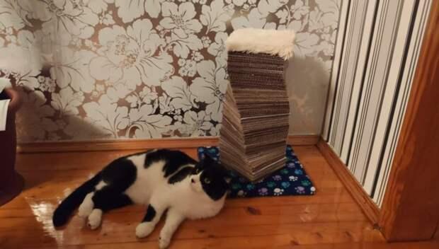 Не спешите выкидывать ненужный картон. Вот такую красоту для котика можно сделать