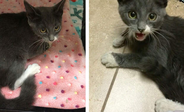 Малютка-котёнок не могла стоять на лапках, но это не помешало ей найти дом
