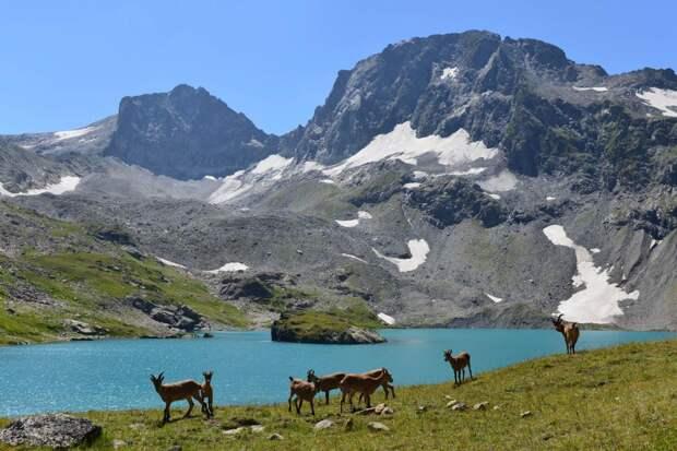 Кавказский заповедник Адыгеи открылся для однодневных экскурсий