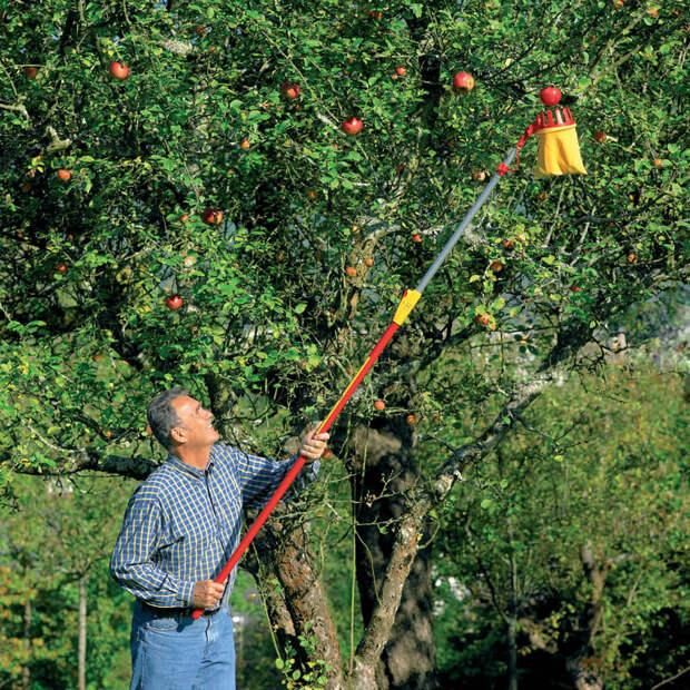 Как сделать плодосъёмник с телескопической ручкой