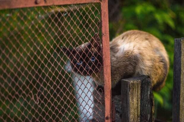 Когда думаешь, что спрятался город, домашние животные, забор, кот, кошка, село, улица, эстетика