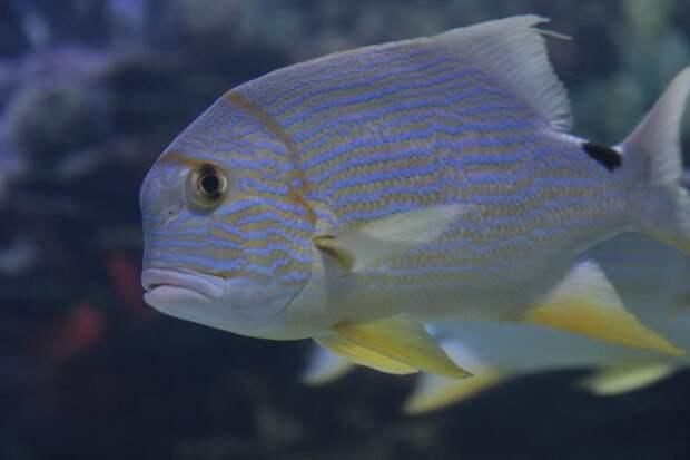 Ученые обнаружили феномен отчаяния у рыб