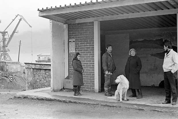 На трассе и на пепелище: Брошенные собаки ждут хозяина до последнего. Просто в этой жизни им не повезло
