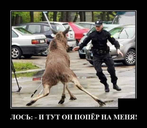 Демотиватор про лося