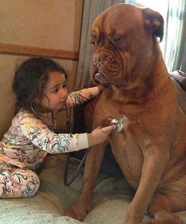 дети должны расти с домашними животными (17)