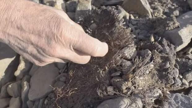 В Арктике оттаял мир, замерший 40 тысяч лет назад