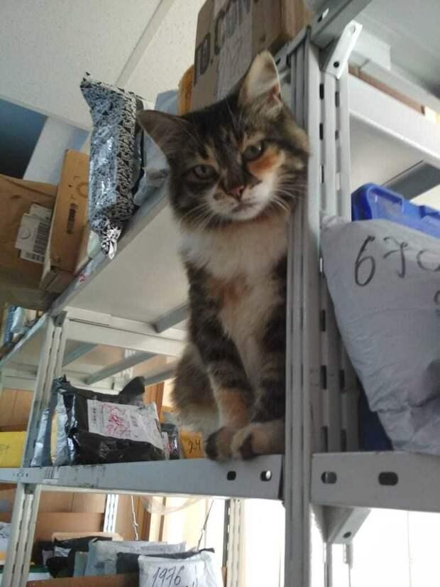 В отделениях «Почты России» начался кошачий флешмоб. А всё из-за одного необычного работника из Омска