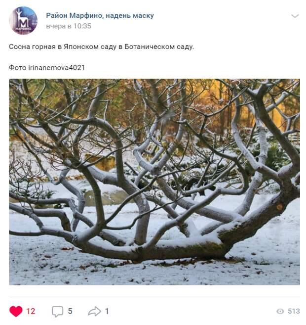 Необычная сосна в Ботаническом саду заинтересовала фотолюбительницу
