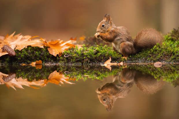 Фотографии по-настоящему завораживают! Дикая природа от Дика Ван Дуйна (DICK VAN DUIJN)