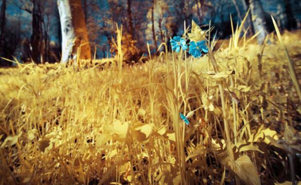Прованс в редких цветах и оттенках