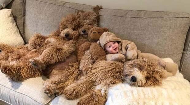 У этого малыша самые мягкие и пушистые няньки, напоминающие плюшевых медвежат