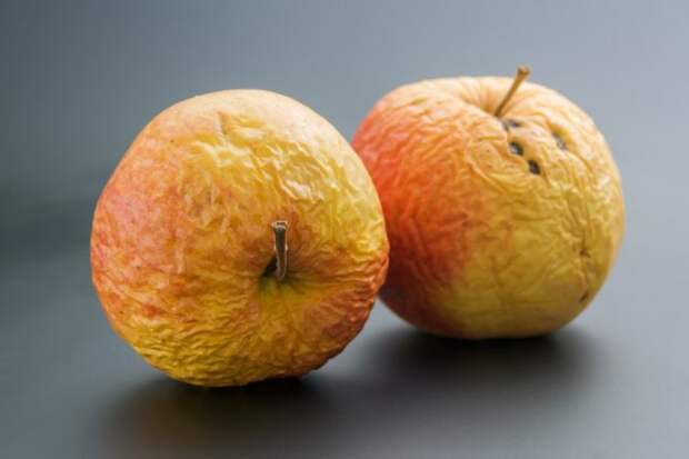 Увядшие яблоки