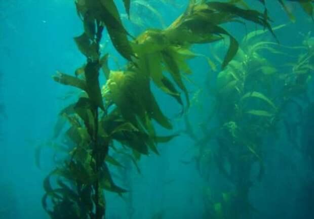 Ядовитые водоросли: какими они бывают и чем опасны? (9 фото)
