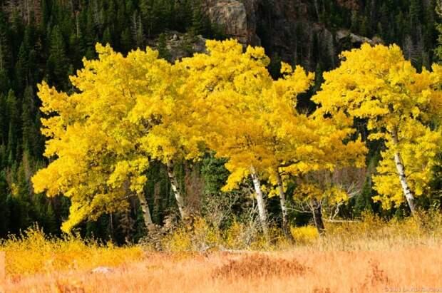 Красивая осень в фотографиях David Kingham