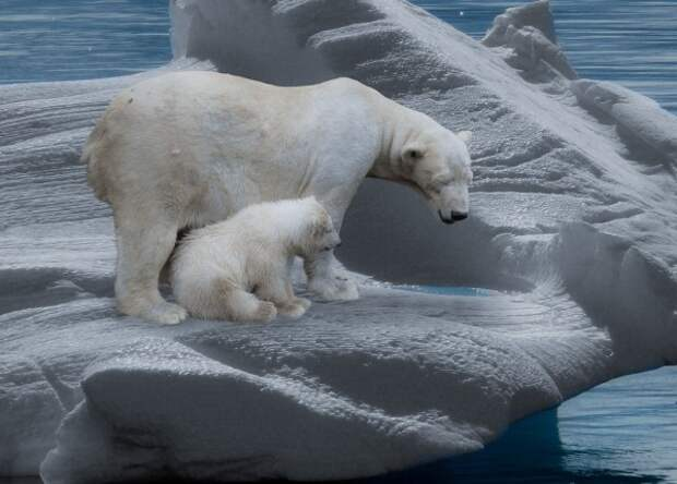 10 интересных фактов о медведях