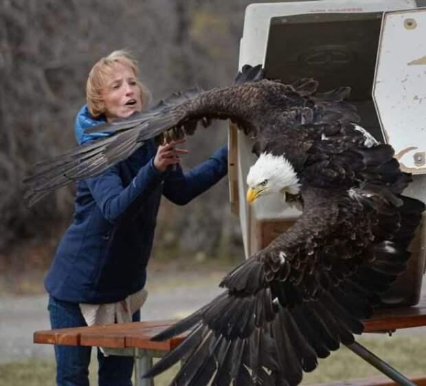 Крупные животные и птицы