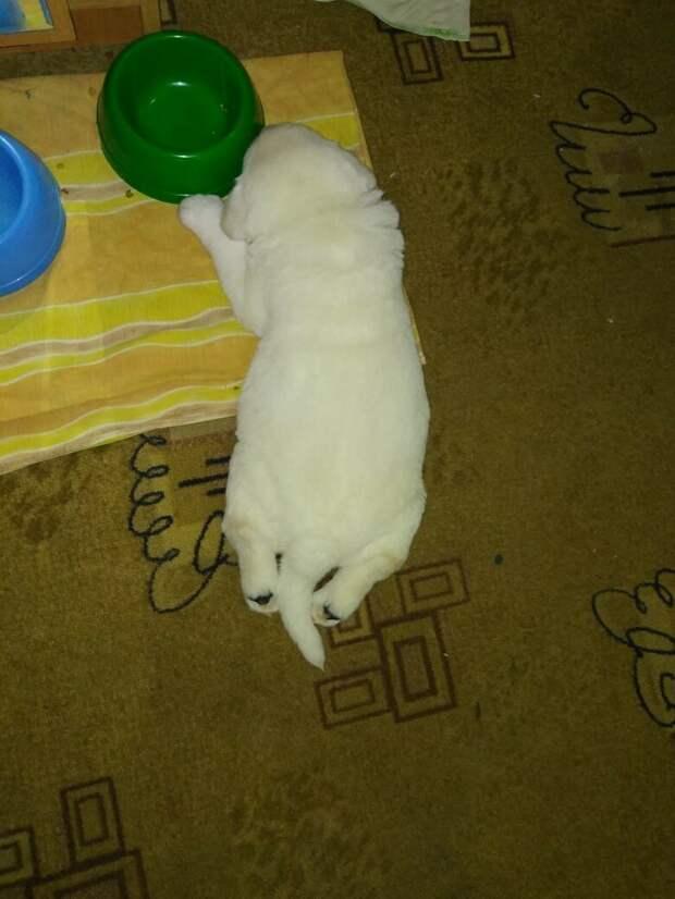 Кошка поняла, что мы не способны наладить контакт со щенком, и лениво направилась к малышу
