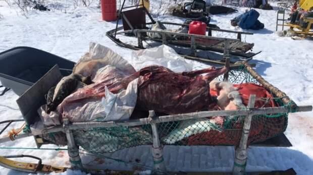 В заповеднике на Камчатке браконьеры убили 12 северных оленей